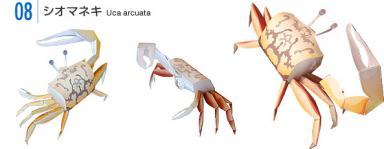 Konica Minolta Crab models