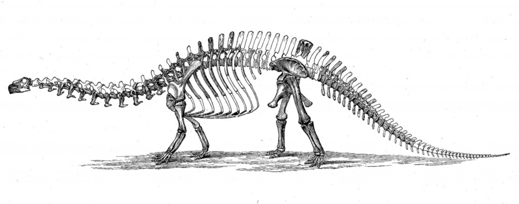 Apatosarus Skeleton