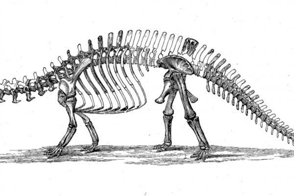 Apatosarus Skeleton