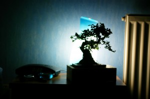 stockvault-banzai-tree-in-the-room104812