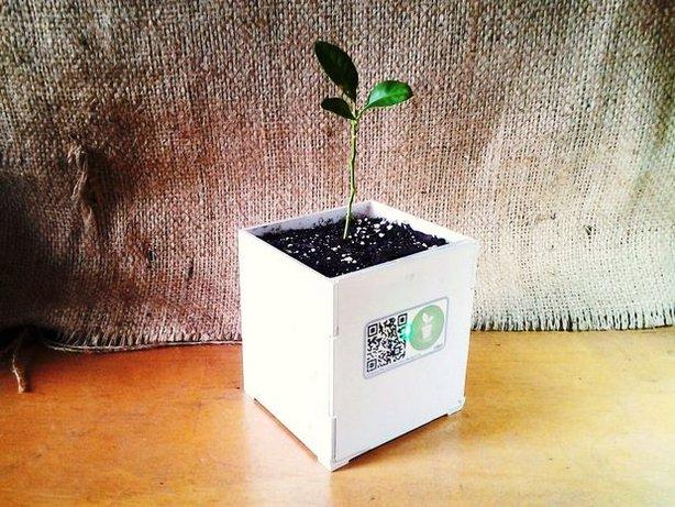 plant-doctor-pot